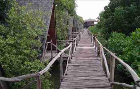 Harga Tiket Masuk Hutan Mangrove PIK