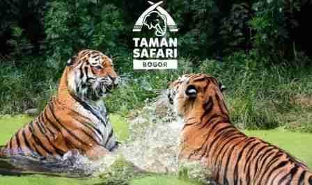 Harga Tiket Masuk Taman Safari Cisarua Bogor